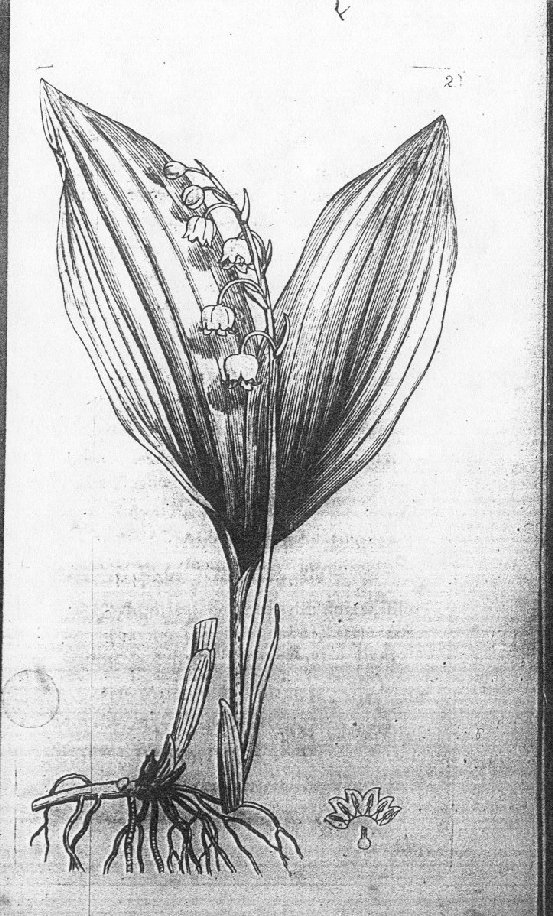 Page of Flora Bedfordiensis by Charles Abbot