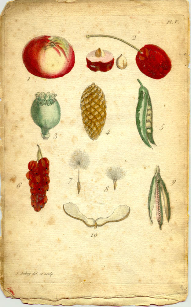 Plants pictured in Recueil de Plantes Coloriees by Thomas Martyn