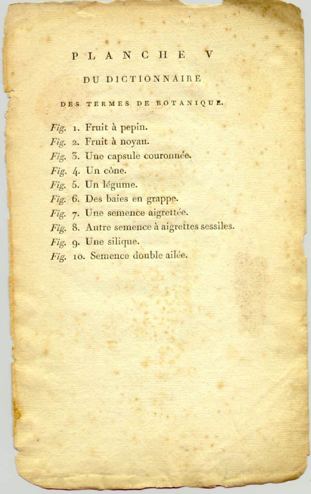 Page in Recueil de Plantes Coloriees by Thomas Martyn