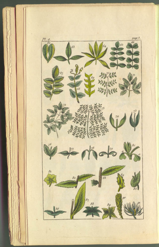 Plate in An Introduction to Botany by Priscilla Wakefield