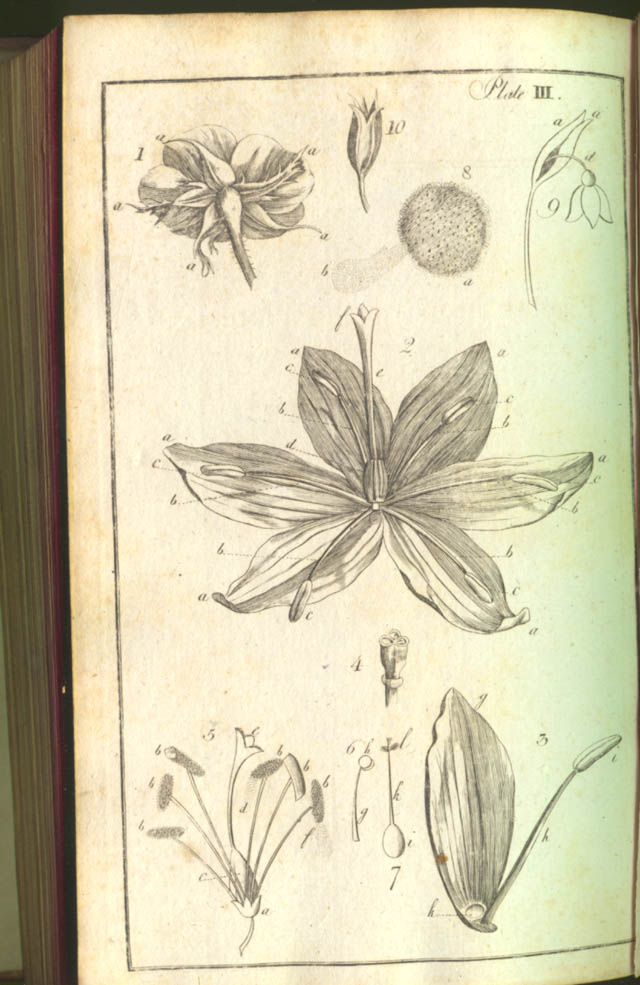 Plate III in A Botanical Arrangement by William Withering