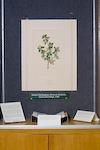 Banks Berberis, green plant framed