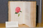 Berlese book open to a red rose