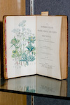 Open page of a book with green flowers