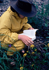 Image of a person in a hat and rain gear squatting by plants; Permission given by photographer (to RAJ via email.) Photo Credit: Steve Deming, MSU Kellogg Biological Station.